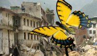 Efecto mariposa y proyecto de Ley de Servicios Profesionales