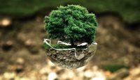 """""""Estoy con la naturaleza"""" el lema del Día Mundial del Medio Ambiente 2017"""