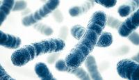 ¿Qué es un probiótico? ¿Para qué sirve?