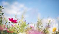 Bienvenida primavera, ¿bienvenida alergia?